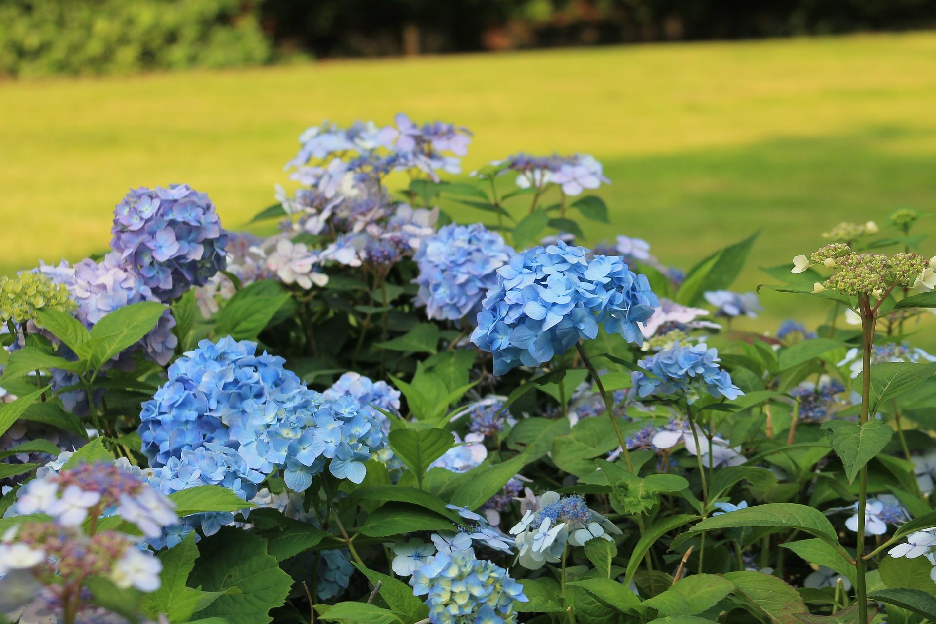 kwiat 3