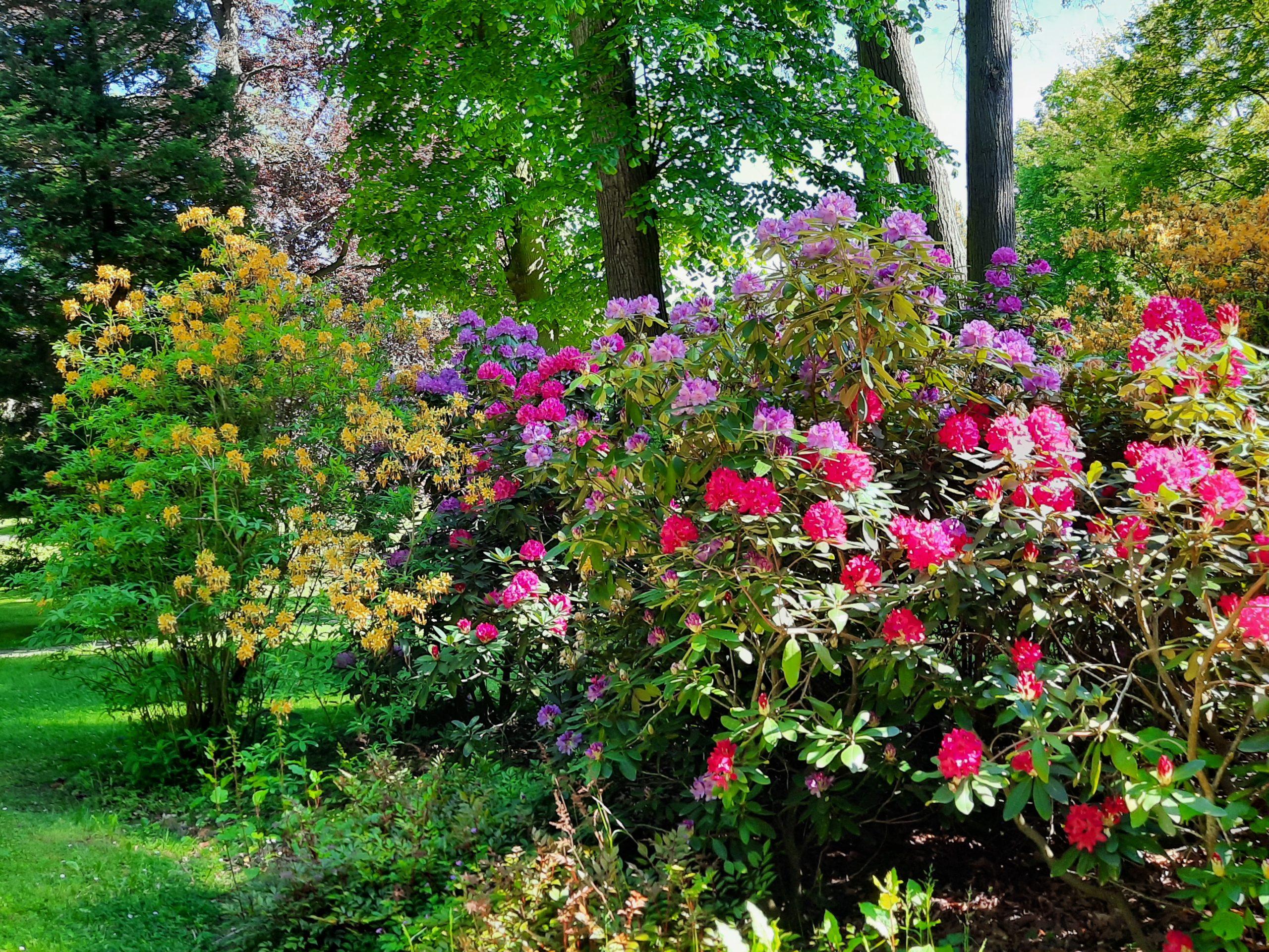 park nectar pond
